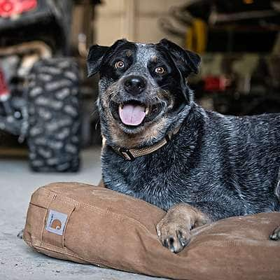 Carhartt  Carhartt Brown Dog Bed - back